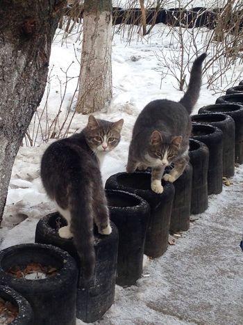 Коты котэ кот Cat Cats Cat♡ Homeless Cats