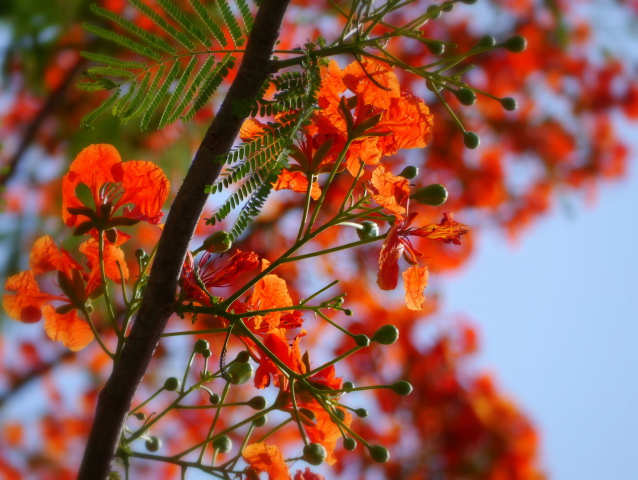 LOW ANGLE VIEW OF LEAVES ON TREE