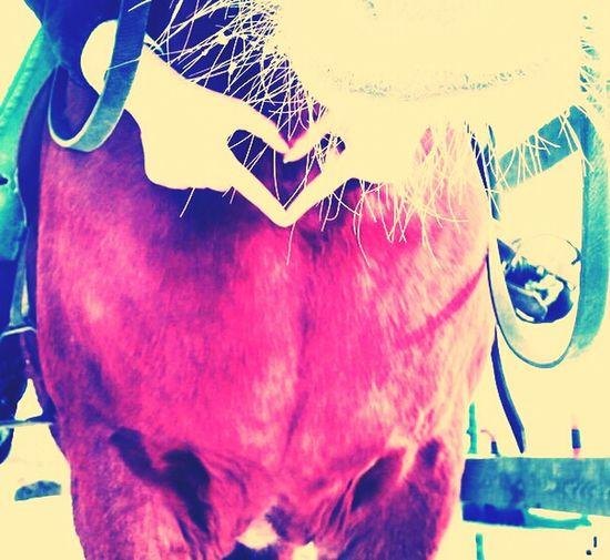 Horses..