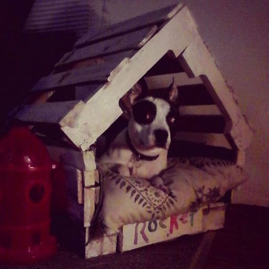Homemade Pallet Doghouse Dogbed Creative DIY Livingroom Decor