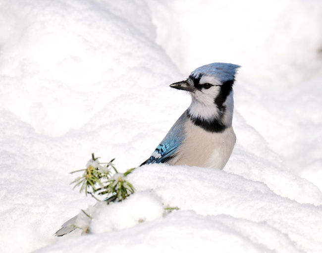 Close-up of bird perching on snow covered landscape