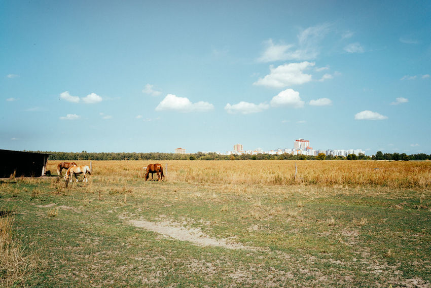 A view of the South Berlin Agriculture Field Horses Summertime The Great Outdoors - 2018 EyeEm Awards Arid Arid Climate Arid Landscape Berliner Ansichten Blue Sky Day Daylight Environment Field Grass Horse Land Landmark Landscape Nature No People Outdoors Plant Sky Summer
