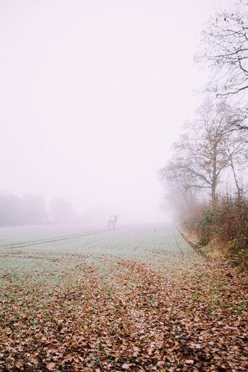 Fog Nature Fog No People Autumn🍁🍁🍁 Minimalism_world