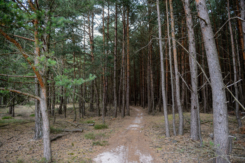 Tafelberg hiking route in Hulshorst the Netherlands Hulshorst Netherlands Path The Netherlands Day Desolate Forest Hiking Trail Holland Landscape Nature No People Outdoors Tafelberg Tree