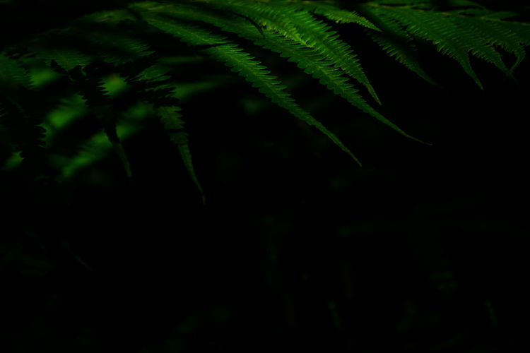 Close-up of fern leaves at night