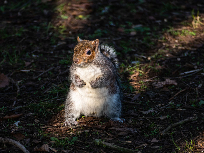 High angle view of squirrel in forest