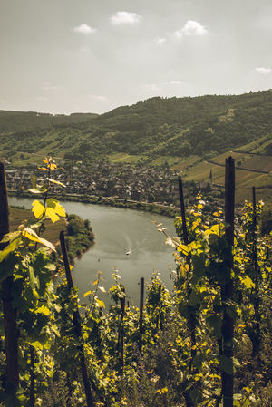 River view through wineyards - Bremmer Calmont on Moselsteig in Germany Hiking Mosel River View Architecture Bremmer Calmont Cloud - Sky Day Flower Germany Growth Landscape Moselschleife Moselsteig Mountain Nature No People Outdoors Plant River Transportation Village Vintage Water Wineyard Yellow The Great Outdoors - 2018 EyeEm Awards The Traveler - 2018 EyeEm Awards