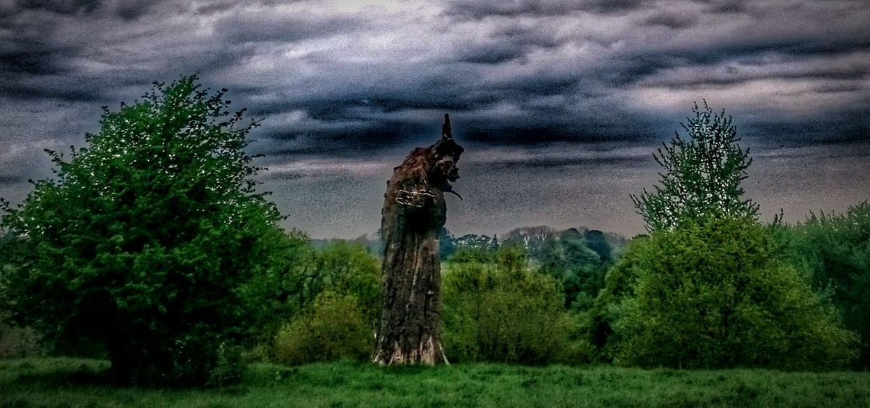 HDR Hdr_Collection Hdr Edit Hdrphotography Nature Landscapes Eerie Scene Eerie Beautiful Eerie Deadtree Eerilybeautiful Treetrunks Spooky Trees Spooky Illusion Photography Illusion Confusion. Spooky Photo