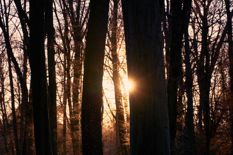 sunset memories Nature Beauty In Nature Landscape Sun Sunbeam Sunrays Winter Tranquility Tranquil Scene Light And Shadow darkness and light Sunset Sunset Memories Mood Lucky's Memories Lucky's Colors Colors Walk Rural Scene Sky Silhouette Tree Dawn Sunset Forest Tree Trunk Idyllic Scenics Calm Shining