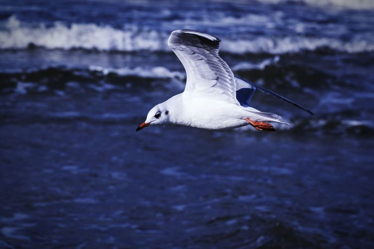 Side View Of Seagull Flying Over Sea