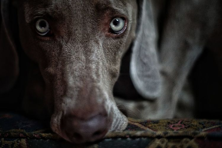 look of love Portrait Black Background Looking At Camera Close-up The Portraitist - 2018 EyeEm Awards