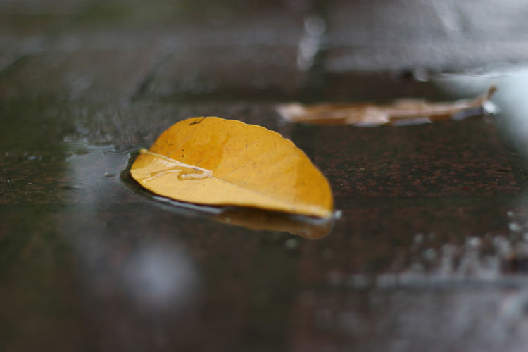 Autumn Close-up Day Floating On Water Fragility Leaf Nature No People Outdoors Water Wet Yellow