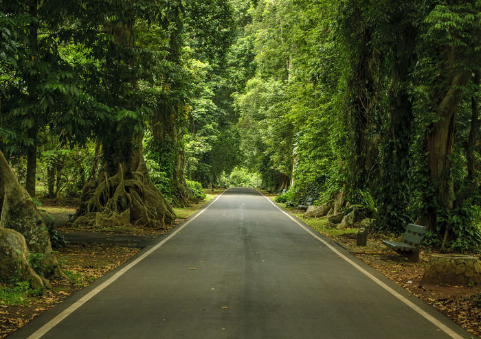 Green Tree Lined Street Forest No People Park Peaceful Road Straight Road Tranquil Scene Tree Lined