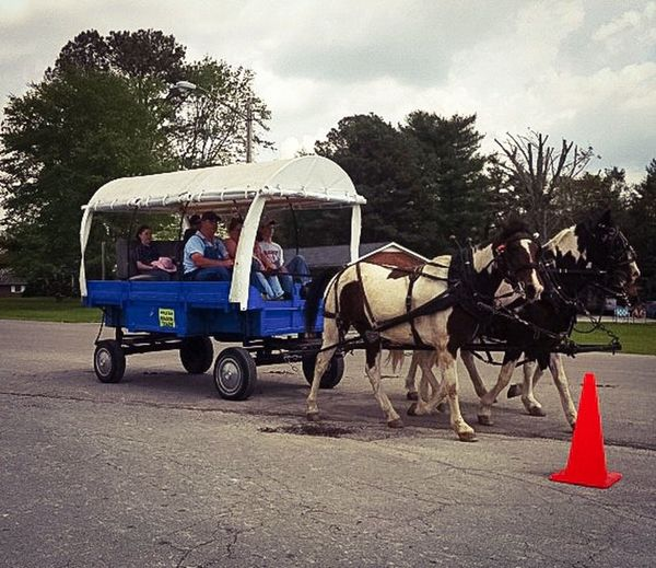 Different Stories Mule Day Southern Traditions Telling Stories Differently Mules Farmers Countryside Carriage Ride