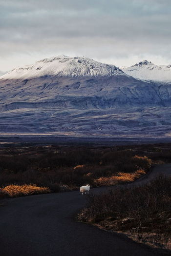 Baa (find me on IG @noeldxng) Landscape Tranquility Lake Scenics Outdoors Mountain Polar Climate Cold Temperature Beauty In Nature Tranquility Perspectives On Nature Be. Ready. Adventure The Week On EyeEm Rural Scene Iceland Travel Destinations Þingvellir National Park No People Beauty In Nature