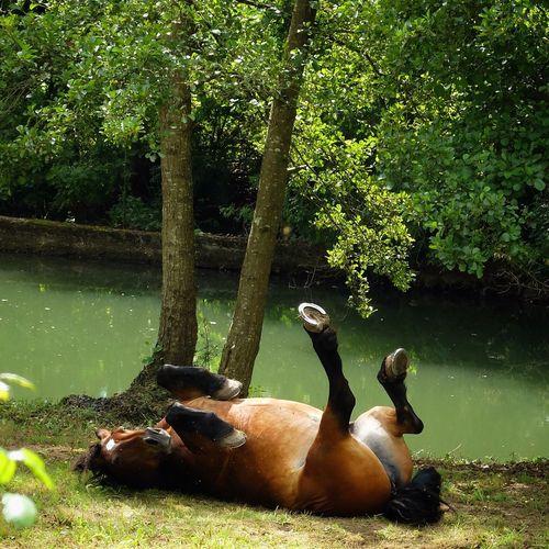 Horse at lake shore against tree
