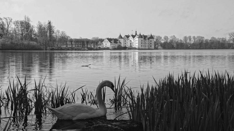 Landscapes With WhiteWall Castle Glücksburg Germany Schleswig-Holstein Swan Castle Park Castle Pond