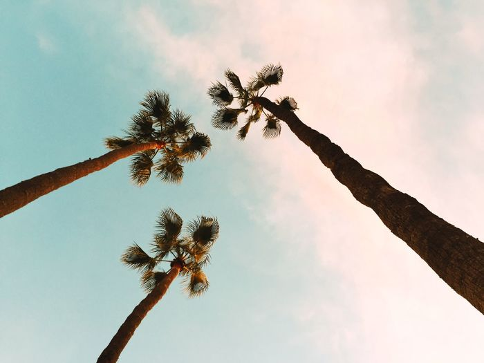 3 3 Generations 3 Of One Beach Time Beach Walk Beauty In Nature Growing Growth Looking Up Low Angle View No People Palm Tree Silhouette Spending Time With Family Standing Tall Three Three Of A Kind Tranquility Tree Tropical Climate Showcase: February
