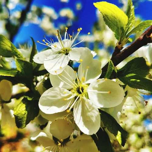 Spring Hi! First Eyeem Photo