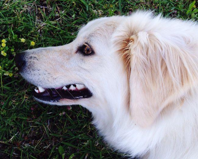 Ich Seh Euch😊 EyeEm Gallery Hund Müsste Man Sein Relaxing Dog Animal Themes Animal Photography Tierfotografie Seeyou Seeu