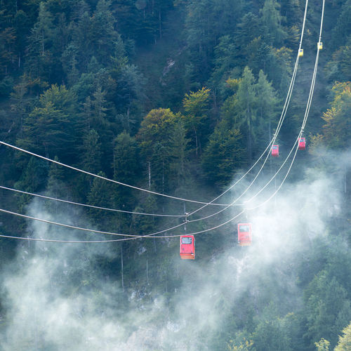 Low angle view of overhead cable cars against trees