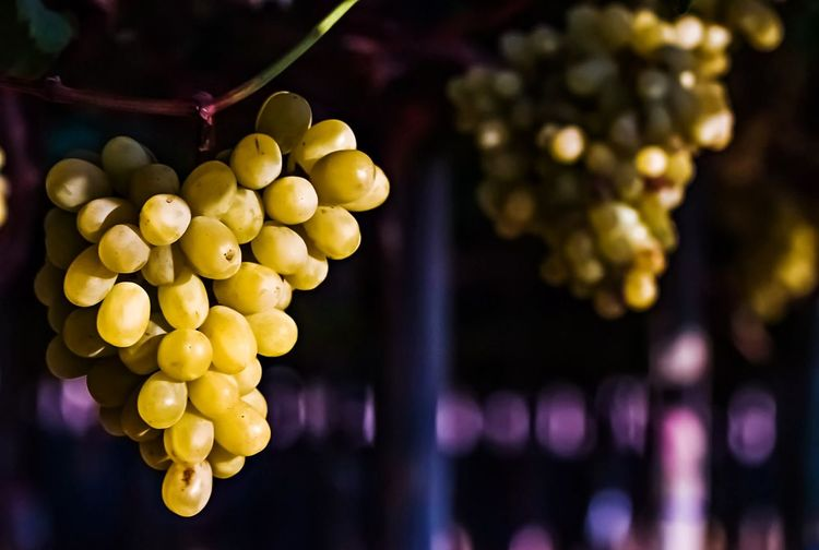 Close-up of grapes hanging in container