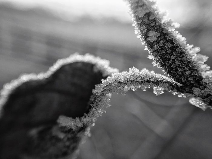 Frosty Macro Morning Winter Cold Temperature Snow Frozen Nature Ice Frost Weather Beauty In Nature Close-up Day Plant Fragility Focus On Foreground Outdoors Growth No People Flower Branch Freshness