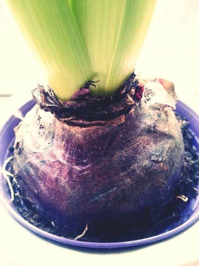 Flower Root