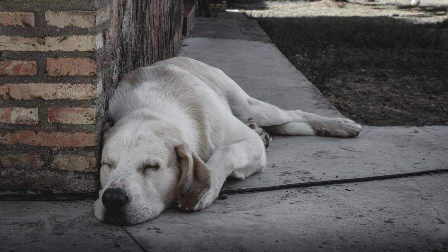 Close-up of dog sleeping on footpath