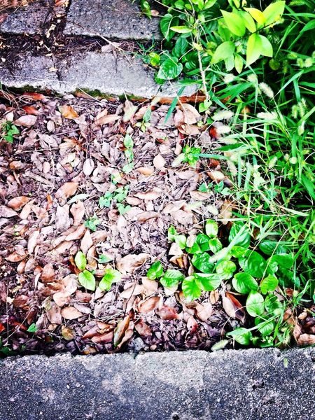 Spring Flourishing Green Plants