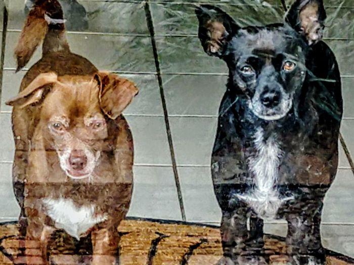 Mes Chiens Behindglass Liquid Colors Mornings Pets Pets Of Eyeem Lookingoutside Pets Portrait Dog Looking At Camera Close-up