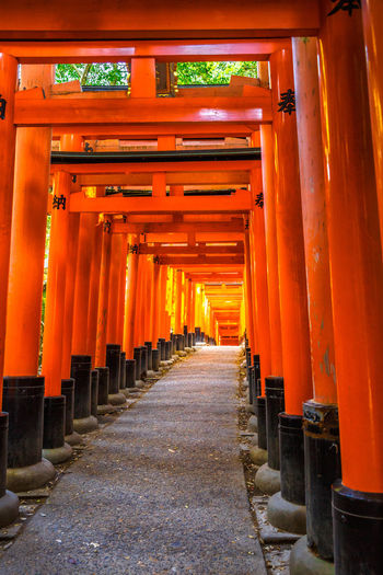 Kyoto, Japan - April 28, 2017: tourist woman walking under red torii gates of famous landmark Fushimi Inari shrine. Travel asia concept. Kyoto's popular landmark. Kyoto, Japan - April 28, 2017: Fushimi Inari Taisha is the most important Shinto shrine famous for its thousands of red torii gates.The lettering engraved on pole are the name of donated organizations Fushimi Fushimi Inari Taisha Fushimi Inari Taisha Shrine Gates Japan Photography Kyoto, Japan Shinto Shrine Shinto Temple TORII Torii Gate Tourist Tourist Attraction  Woman Architectural Column Architecture Belief Building Built Structure Colonnade Diminishing Perspective Direction Footpath Fushimi Inari Kyoto Fushimi Inari Shrine In A Row Japan Culture Kyoto Kyoto Japan Kyoto,japan Kyotojapan No People Orange Color Outdoors Place Of Worship Religion Repetition Shinto Of Japan Shintoism Shrine Spirituality The Way Forward Torii Gate Japan