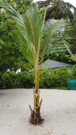 Close-up of palm tree in yard