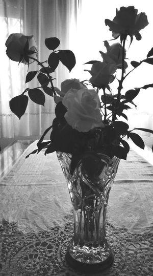 White Roses Roses Flowers  Blackandwhite Bride Roses
