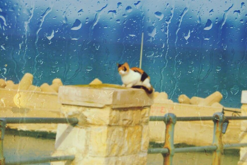 Cat Animal_collection Rain Taking Photos