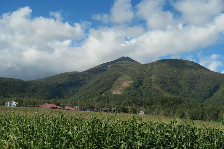 autumn niseko hokkaido japan 2018 In One Photograph EyeEmNewHere It's About The Journey Moments Of Happiness Capture Tomorrow Architecture Tree Grass Mountain Hokkaido Cloud And Sky Niseko Yotei Yotei Mt., Hokkaido Yotei Mt. Sky Landscape Environment Land Cloud - Sky Field Plant Scenics - Nature Rural Scene Growth Nature Agriculture Beauty In Nature Tranquility Crop  Day Farm Tranquil Scene Outdoors Plantation