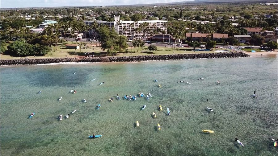 Surfing lessons Mavicpro Djimavicpro Dji KalamaPark Maui Kihei High Angle View Large Group Of Animals Animal Themes Day Outdoors Nature