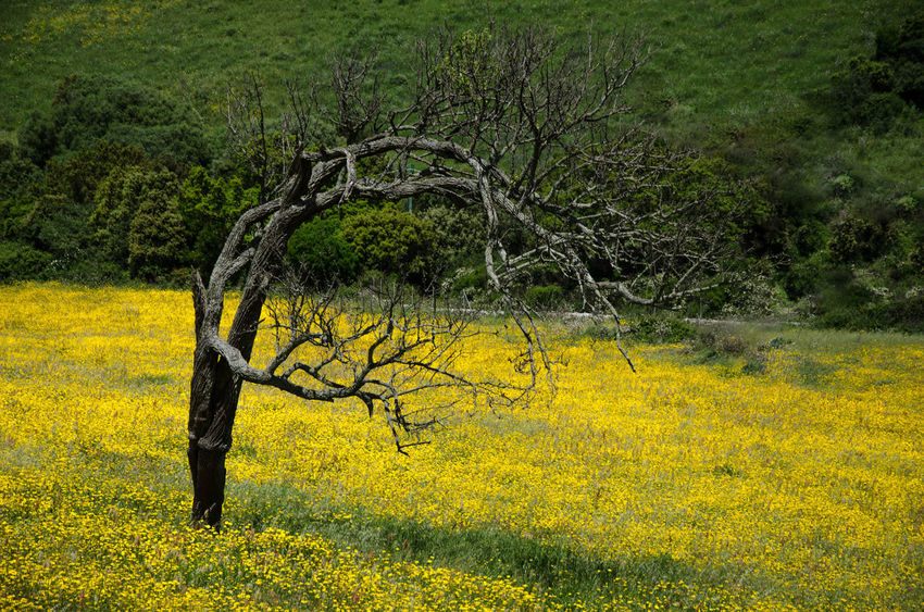 Beauty In Nature Environment Field Flower Grass Green Color Land Landscape Nature No People Outdoors Plant Rural Scene Scenics - Nature Tranquil Scene Tranquility Tree Yellow