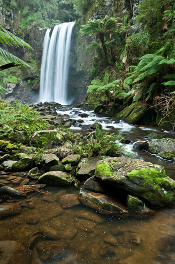 The Otways National Park Water fall Green Color Green Fern Tree Fern Waterfall Water Waterfall Power In Nature Motion Long Exposure Rapid Blurred Motion Flowing Water Splashing High-speed Photography Flowing Falling Water Moss Stream Running Water