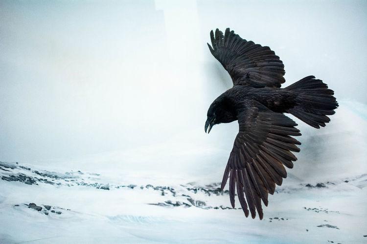 Bird flying in the winter