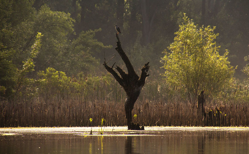 Scenic View Of Tree By Lake In Forest