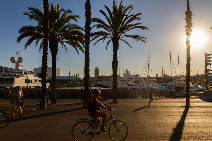 Sunset in front of Port Vell / Barcelona / Spain Barcelona, Spain Bicycle Girl Marine Natural Natural Condition Natural Light Palm Palm Tree Palm Trees Portvell Portvellbarcelona Sea Sea And Sky Shadow Silhouette SPAIN Sun Sunlight Sunset Sunset Silhouettes Yatch Yatch Marine