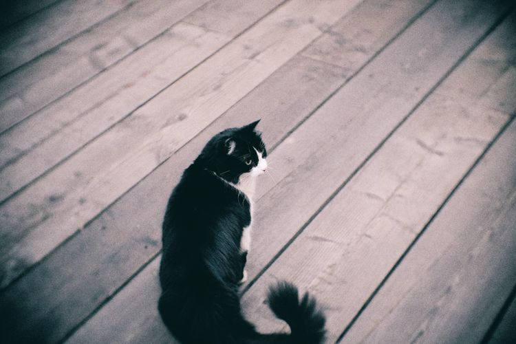 Animal Animal Themes Cat Cats Day Domestic Animals Domestic Cat Feline Fujifilm Mammal No People One Animal Outdoors Pets Sitting Stray Animal Stretphotography Tail Whisker Zoology