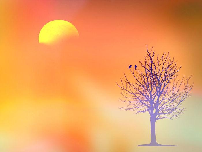 Silhouette of plant against orange sky