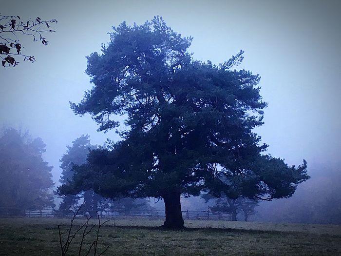 Wald Nebel