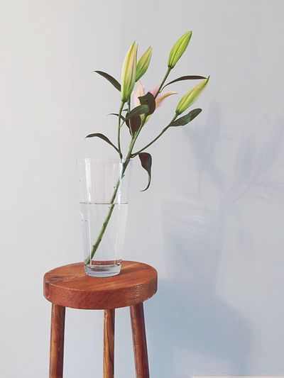 Flower Vase Plant Table No People Nature Indoors  Fragility Growth Close-up Freshness Water Beauty In Nature Day