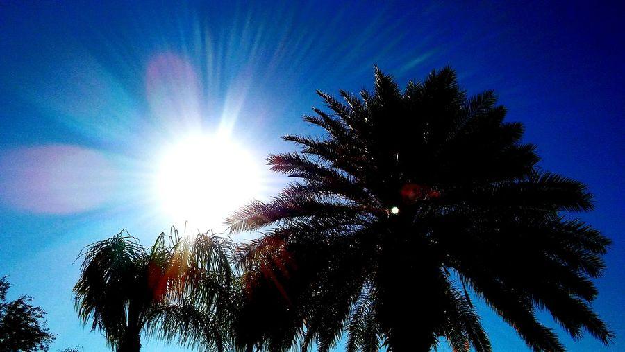 Sun_collection Sun Rays Sunny Day☀ Sunny Day❤ Sunny Days . ☀ Sunny Day 🌞 Sunnyday☀️ Sunny☀ Sun And Palm Trees Palm Trees ❤❤ Plams Palm Trees Sunlight ☀