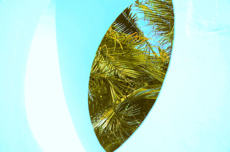 Natural Eye Discover Your City Palm Leaf Textures and Surfaces Blue Close-up Day Directly Above Forms And Shapes Green Color Growth High Angle View Indoors  Leaf Look Nature No People Palette Palm Tree Pattern Plant Sky Still Life Studio Shot White Background White Color