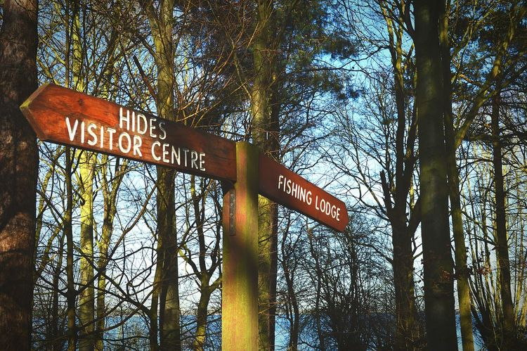 Sign Signpost Signporn Which Way? Which Way To Go? In The Woods Winter Trees Countryside Countryside Walk Nature Nature Reserve Nature Photography EyeEm Nature Lover United Kingdom Nikon D3200