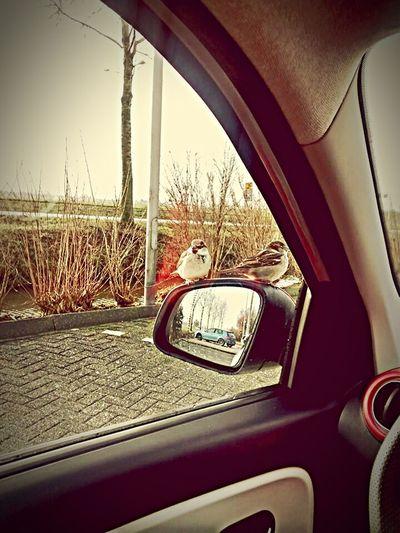 MeinAutomoment Sparrow TWINGO Birds Bird Photography Bird Spatz Spatzen Mus